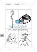 Lebensraum Wiese: Das ökologische Netz einer Wiese - Text- und Bildkarten Preview 11