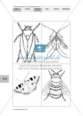 Lebensraum Wiese: Das ökologische Netz einer Wiese - Text- und Bildkarten Preview 13
