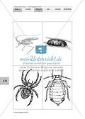 Lebensraum Wiese: Das ökologische Netz einer Wiese - Text- und Bildkarten Preview 15