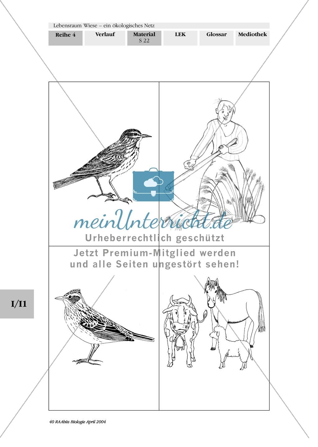 Lebensraum Wiese: Das ökologische Netz einer Wiese - Text- und Bildkarten Preview 18