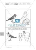 Lebensraum Wiese: Das ökologische Netz einer Wiese - Text- und Bildkarten Preview 19