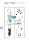 Lebensraum Wiese: Das ökologische Netz einer Wiese - Text- und Bildkarten Preview 3