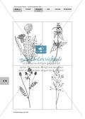 Lebensraum Wiese: Das ökologische Netz einer Wiese - Text- und Bildkarten Preview 5