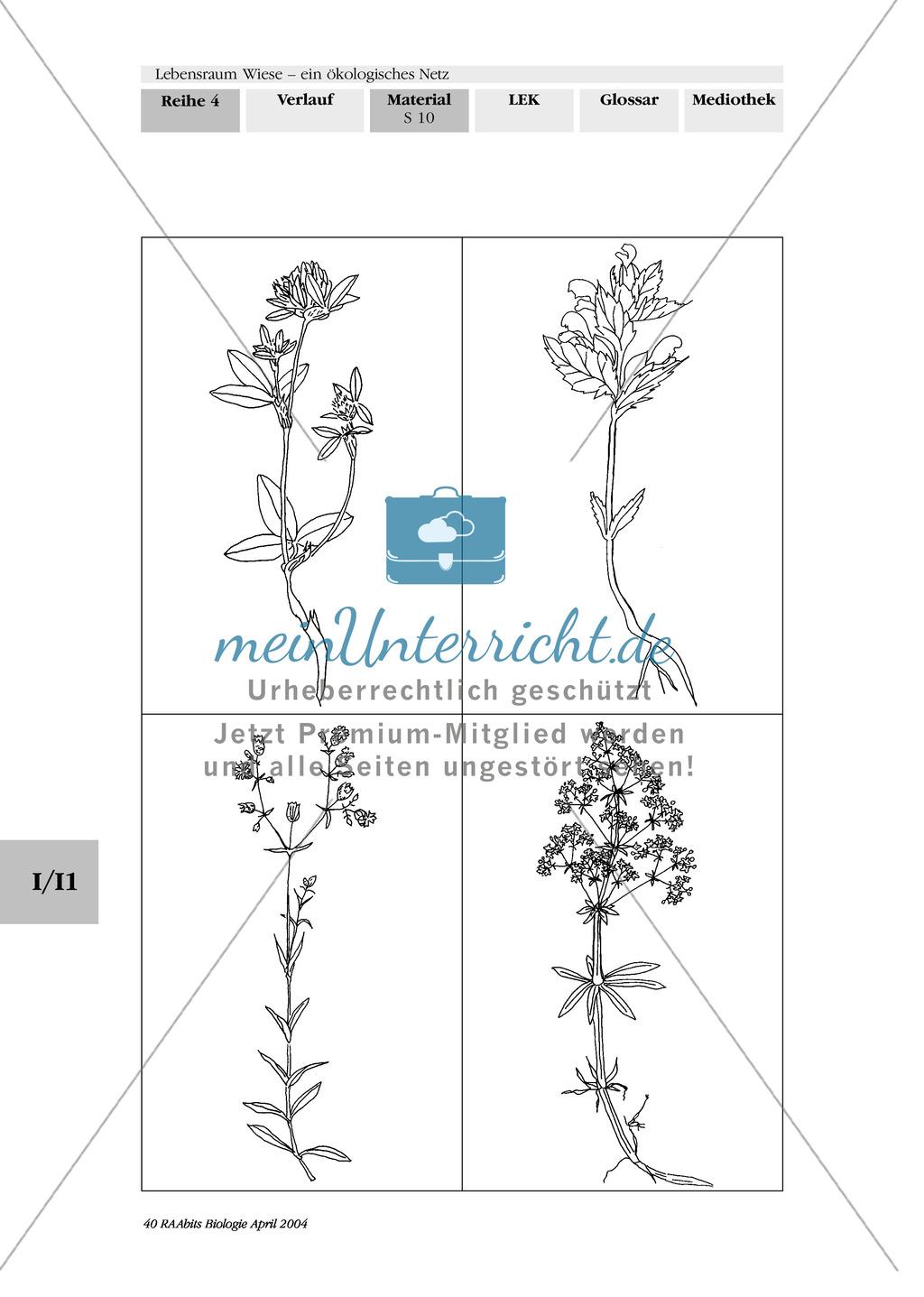 Lebensraum Wiese: Das ökologische Netz einer Wiese - Text- und Bildkarten Preview 6