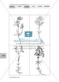Lebensraum Wiese: Das ökologische Netz einer Wiese - Text- und Bildkarten Preview 7