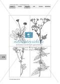 Lebensraum Wiese: Das ökologische Netz einer Wiese - Text- und Bildkarten Preview 9