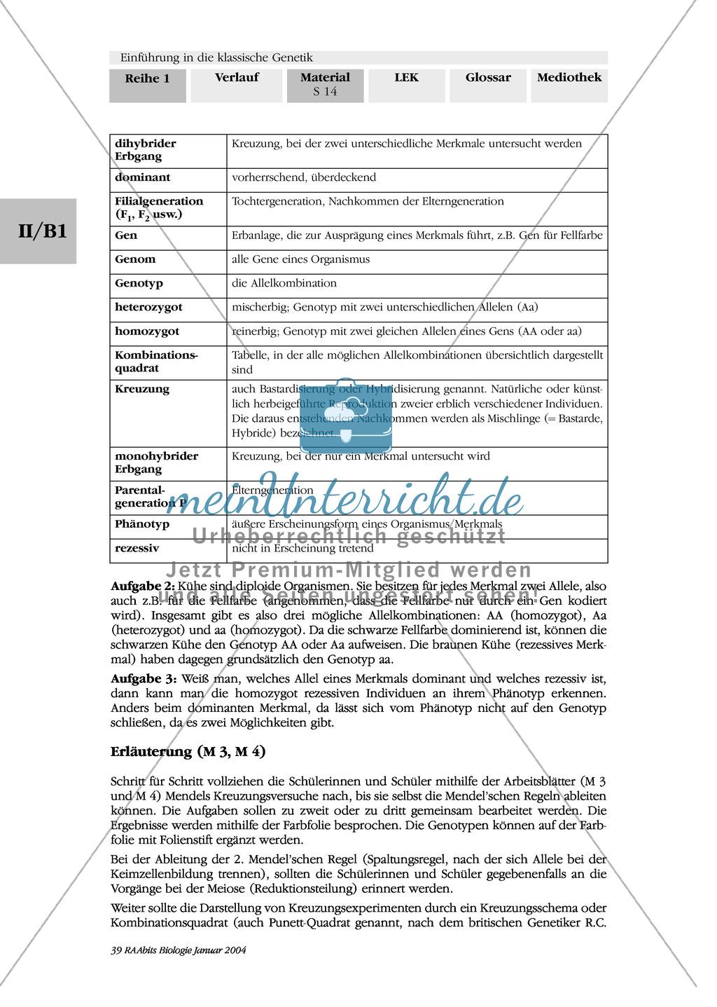 Klassische Genetik: Mendel`sche Regeln - Begriffe, Regeln, Kodominanz Preview 10
