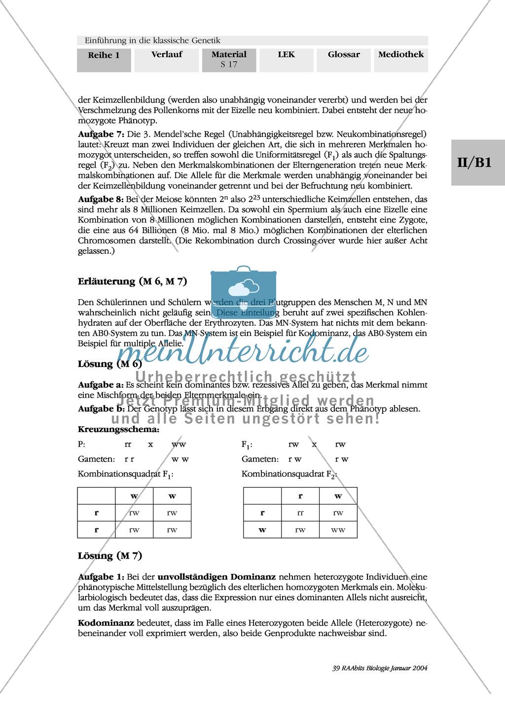 Klassische Genetik: Mendel`sche Regeln - Begriffe, Regeln, Kodominanz Preview 13