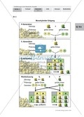 Klassische Genetik: Mendel`sche Regeln - Begriffe, Regeln, Kodominanz Thumbnail 2