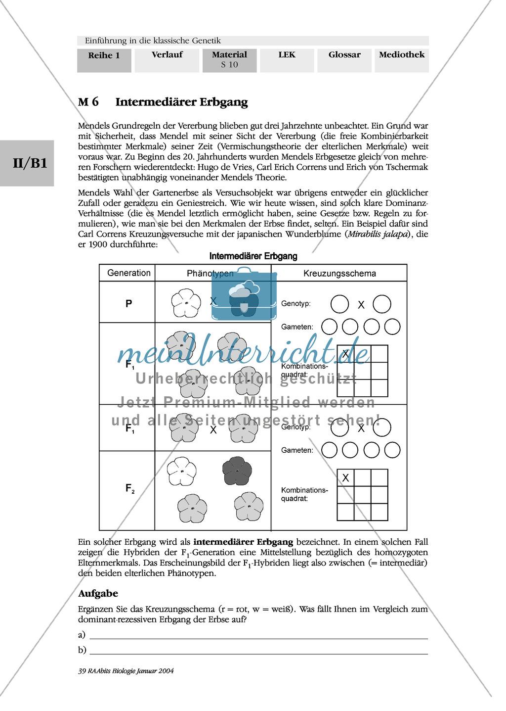 Klassische Genetik: Mendel`sche Regeln - Begriffe, Regeln, Kodominanz Preview 7