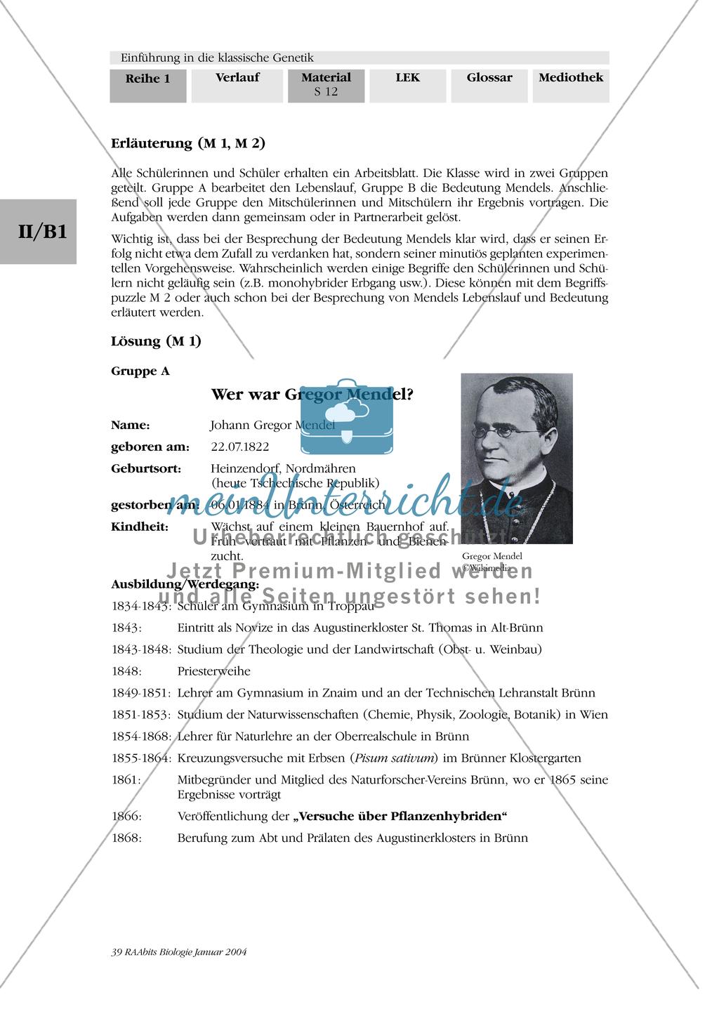 Klassische Genetik: Mendel`sche Regeln - Begriffe, Regeln, Kodominanz Preview 8