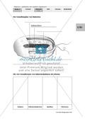 Bakterien: Grundbauplan und Vermehrung: Text, Zeichnung, Diagramm Preview 2