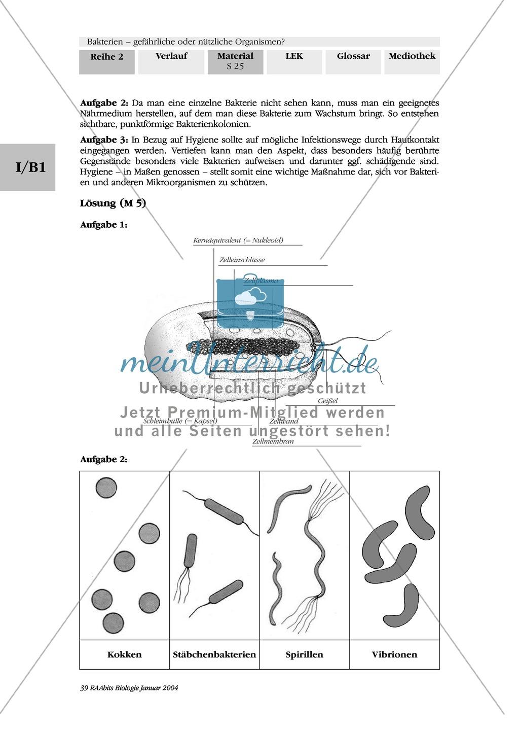 bakterien grundbauplan und vermehrung text zeichnung diagramm meinunterricht. Black Bedroom Furniture Sets. Home Design Ideas