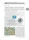Biologie, Entstehung und Entwicklung von Lebewesen, Interaktion von Organismus und Umwelt, Bau und Funktion von Biosystemen, Erkrankung, Virus, Krankheiten