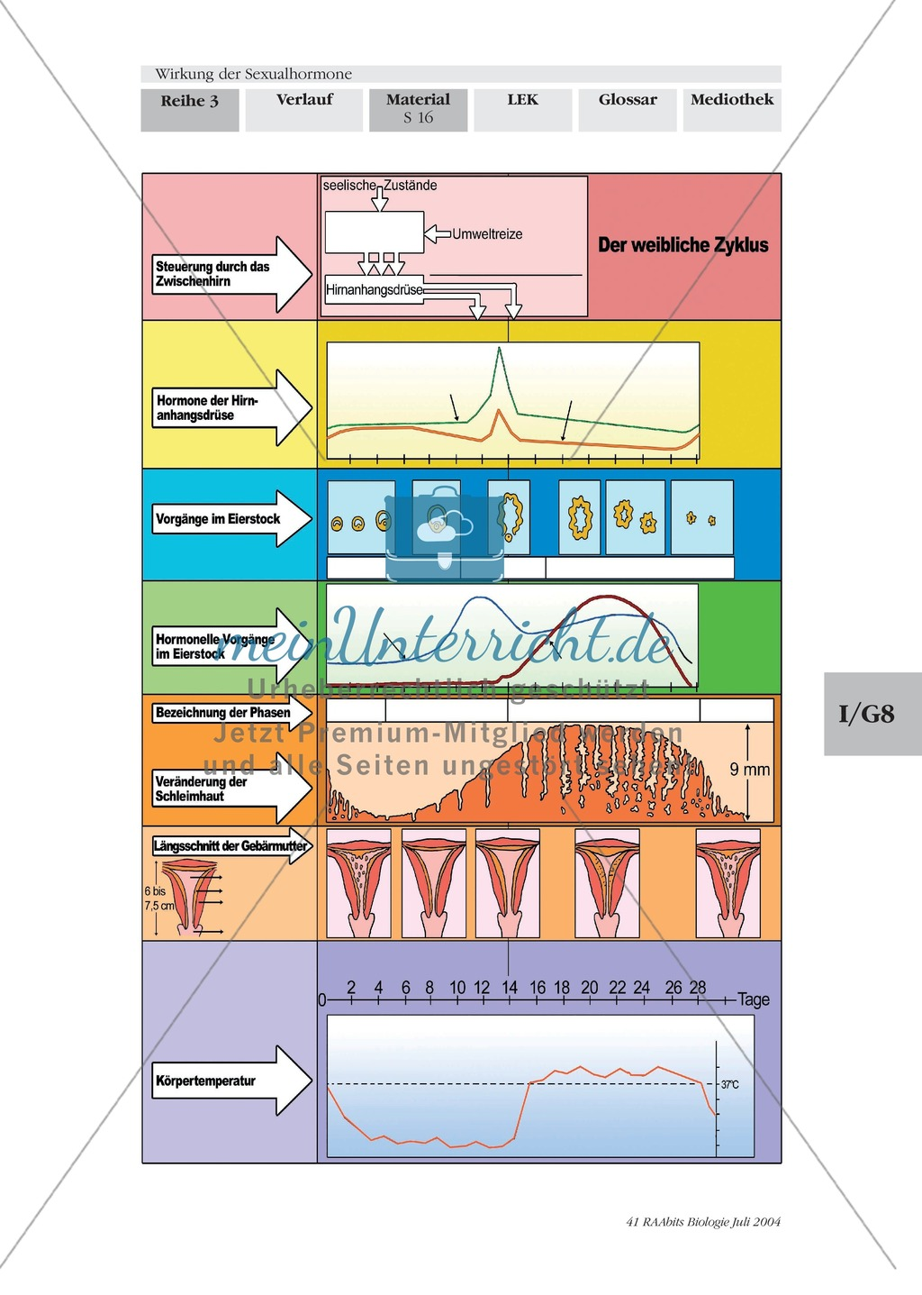 Wirkung der Sexualhormone: Hormone der Hirnanhangsdrüse (Hypophyse) + des Zwischenhirns (Hypothalamus) Preview 7