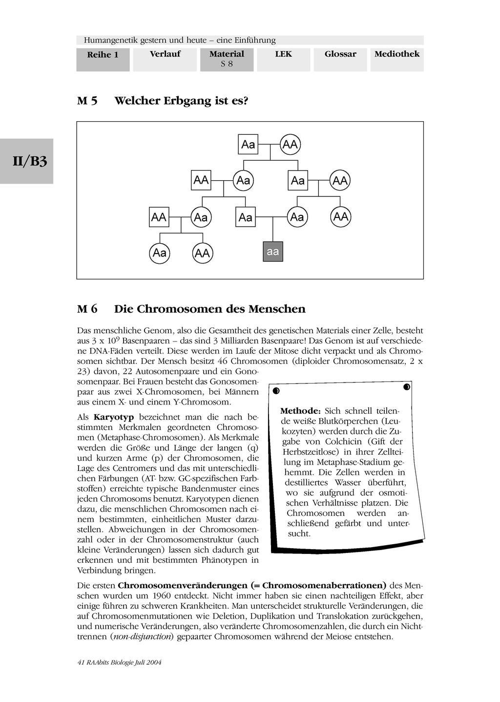 Humangenetik - Aufgaben zu Erbkrankenheiten und Erbgang Preview 3