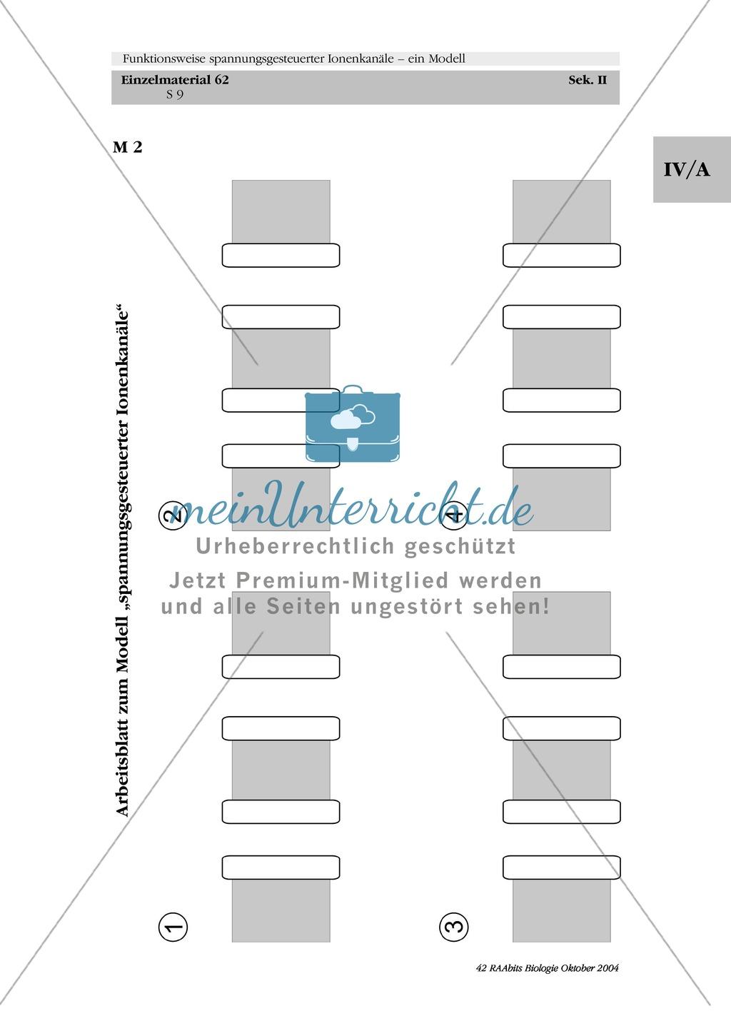 Struktur und Funktion spannungsgesteuerter Ionenkanäle bei der Ausbildung eines Aktionspotenzials in Einzel- und Gruppenarbeit beschreiben Preview 2