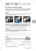 Biologie, Ordnungsprinzipien für Lebewesen, Zoologie, Wirbellose Tiere