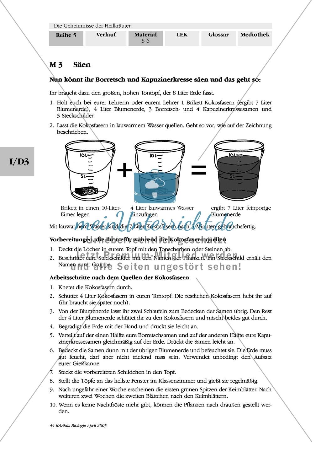 Säen und Pflanzen von Heilkräutern: Besorgungsliste, Gruppenarbeit, Kapuzinerkresse, Ringelblume, Spitzwegerich, Minze, Borretsch Preview 1