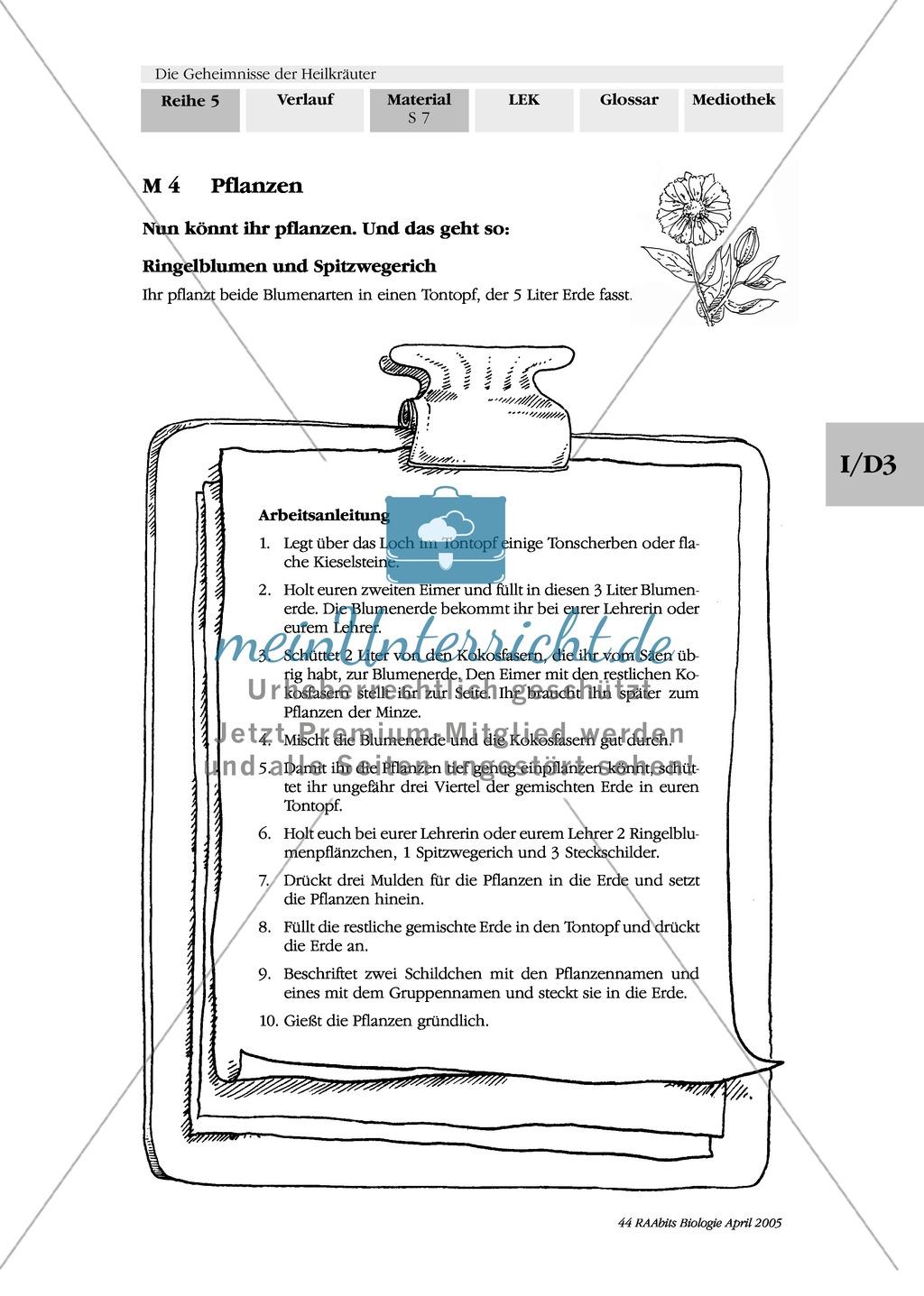 Säen und Pflanzen von Heilkräutern: Besorgungsliste, Gruppenarbeit, Kapuzinerkresse, Ringelblume, Spitzwegerich, Minze, Borretsch Preview 2