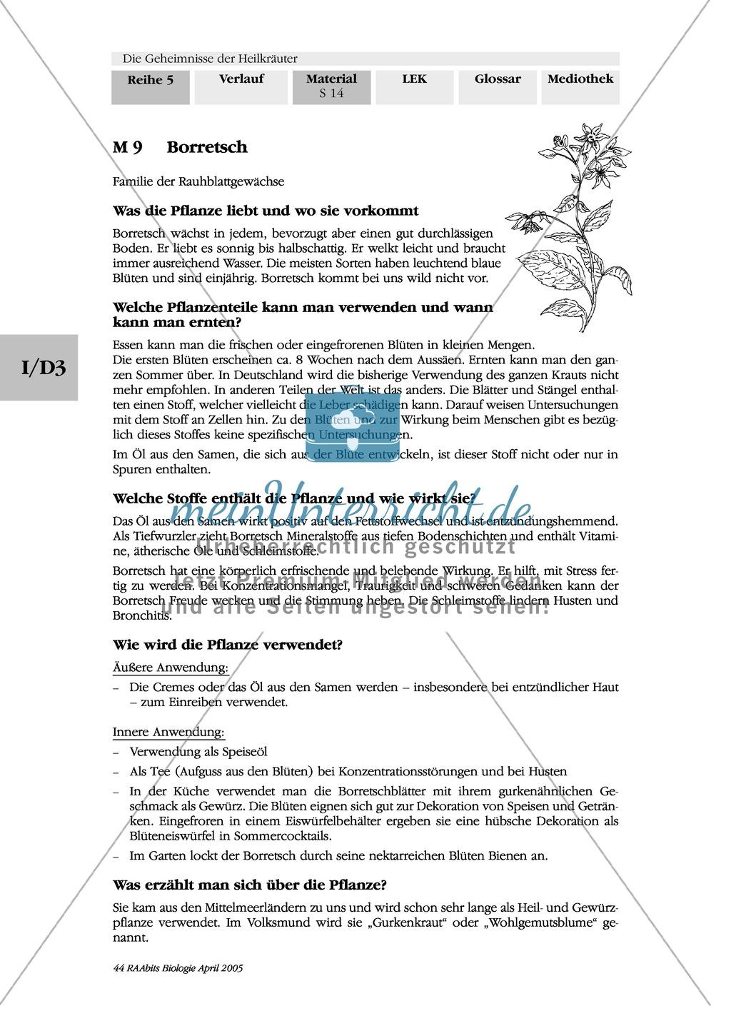 Heilpflanzenportraits: Gruppenarbeit, Texte, Ringelblume, Spitzwegerich, Kapuzinerkresse, Minze, Borretsch Preview 1