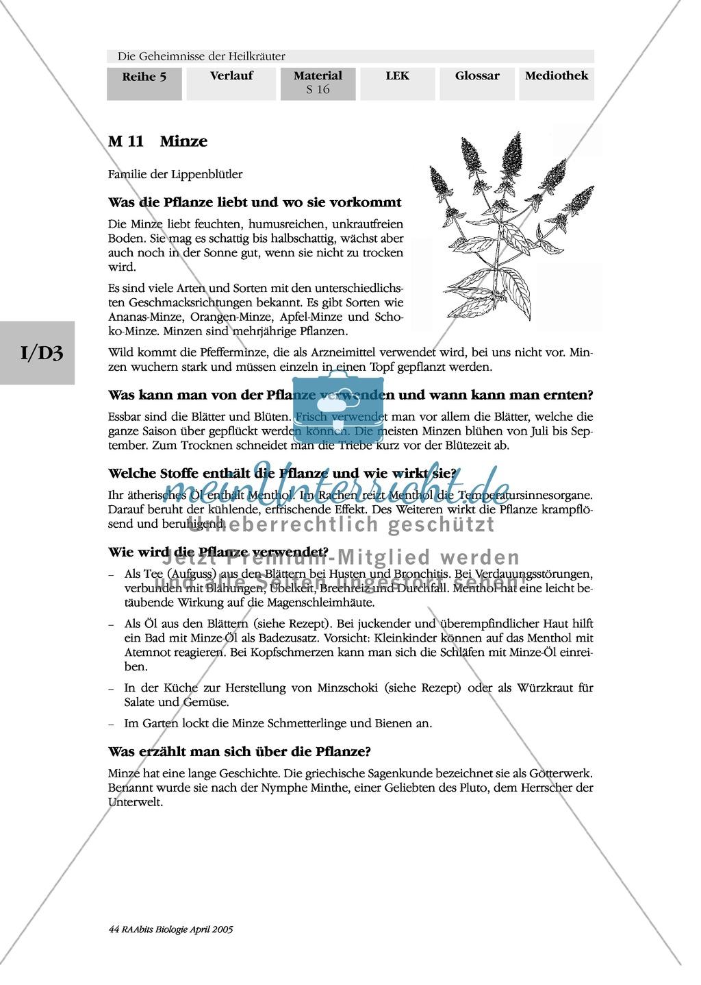 heilpflanzenportraits gruppenarbeit texte ringelblume spitzwegerich kapuzinerkresse minze. Black Bedroom Furniture Sets. Home Design Ideas