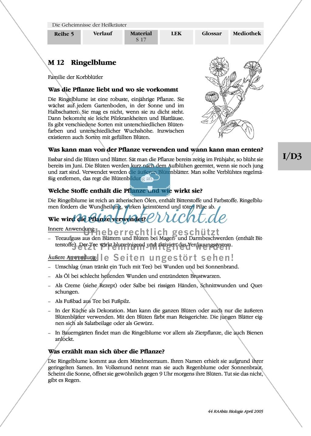 Heilpflanzenportraits: Gruppenarbeit, Texte, Ringelblume, Spitzwegerich, Kapuzinerkresse, Minze, Borretsch Preview 4