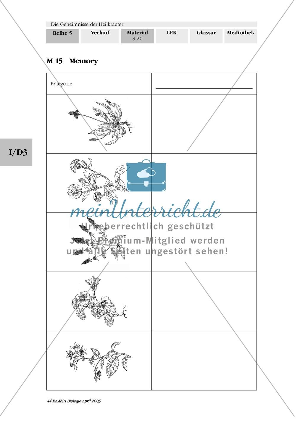 Memoryspiel Heilkräuter: Gruppenarbeit, Ringelblume, Spitzwegerich, Kapuzinerkresse, Minze, Borretsch Preview 1