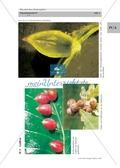Buchengallen: Die Entwicklung der Buchengallmücke Preview 2