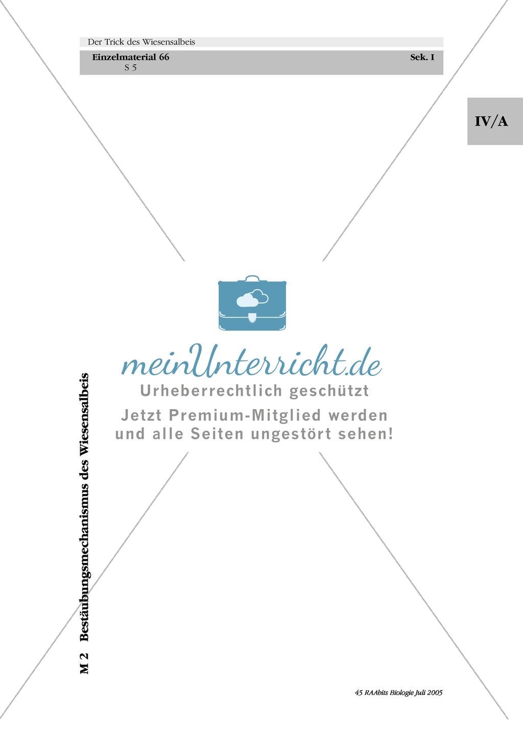 Wiesensalbei - ein Vertreter der Lippenblütler: Lage der Ober- und Unterlippe der Blüte + Bestäubungsmechanismus Preview 2