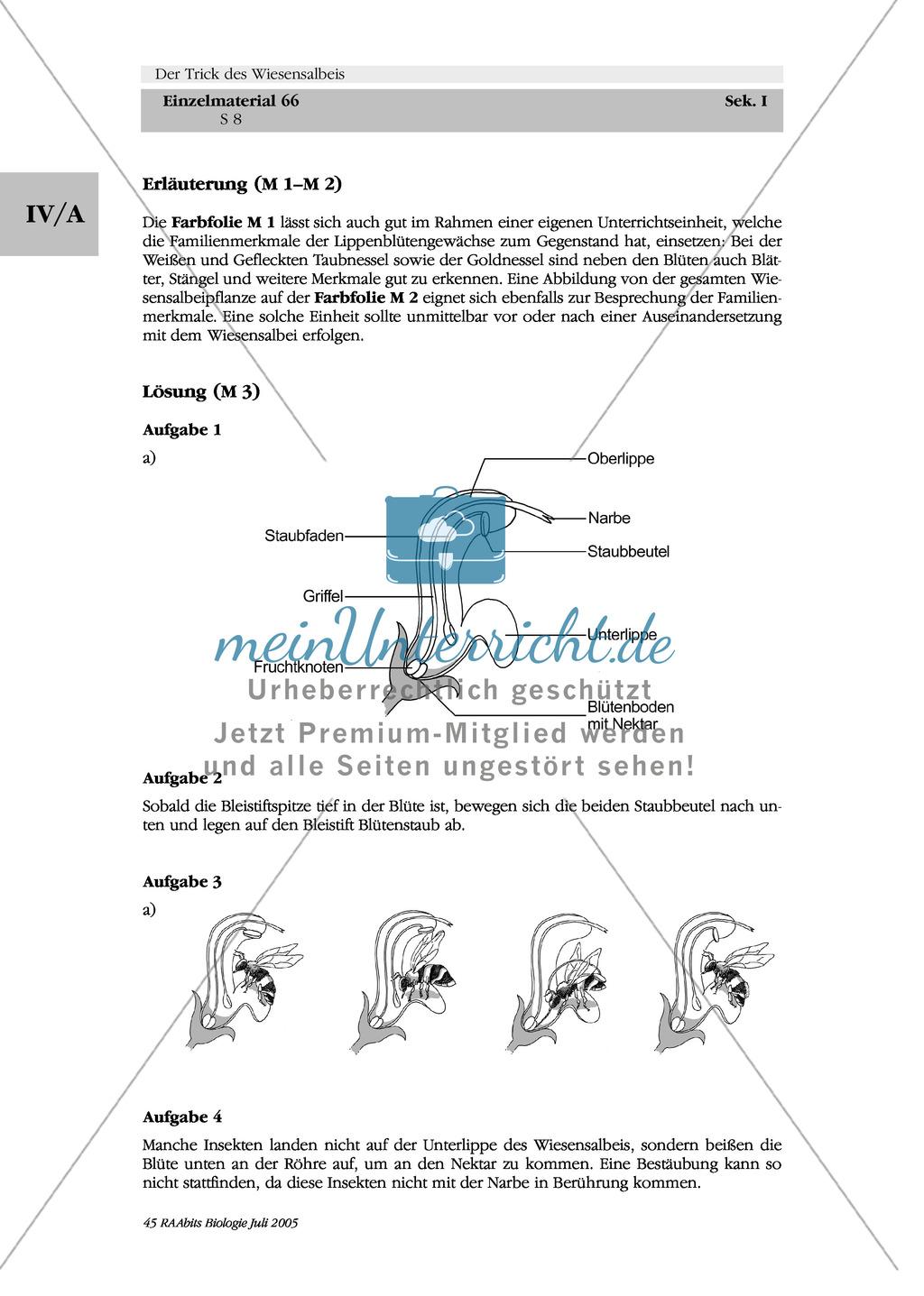 Wiesensalbei - ein Vertreter der Lippenblütler: Lage der Ober- und Unterlippe der Blüte + Bestäubungsmechanismus Preview 4