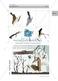 Vögel im Winter: Zugvögel, Fotos Thumbnail 1