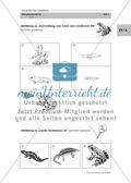 Der große Preis: Amphibien Preview 13