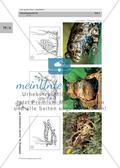 Der große Preis: Amphibien Preview 14