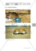 Anpassungen der Blassen Rennmaus an ihren Lebensraum / Torpor als eine besondere Stoffwechselanpassung / Preview 1
