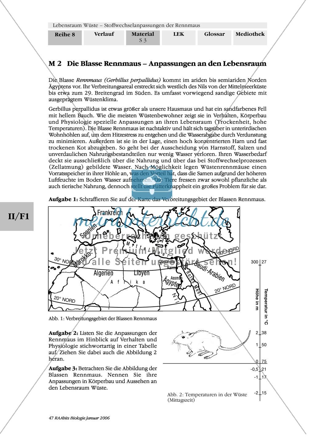 Die Anpassung der Blassen Rennmaus an ihren Lebensraum kennenlernen Preview 2