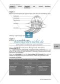 Lage- und Drehsinn: Gleichgewichtssinn: Beschriften Thumbnail 1
