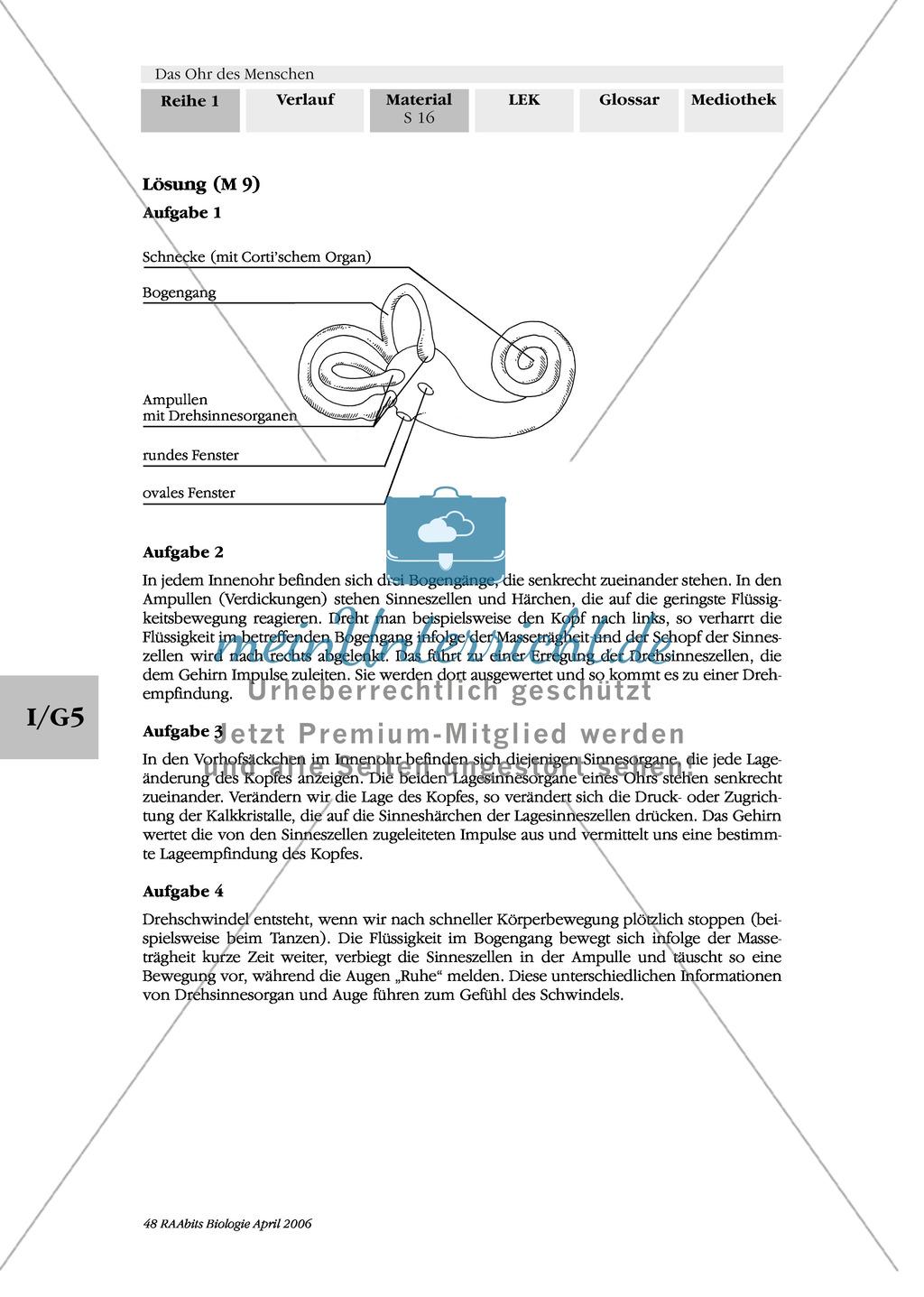 Lage- und Drehsinn: Gleichgewichtssinn: Beschriften Preview 2