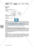 Lage- und Drehsinn: Gleichgewichtssinn: Beschriften Thumbnail 2