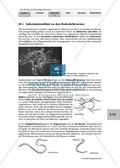 Lebewesen im Boden: Bestimmungshilfe Preview 2