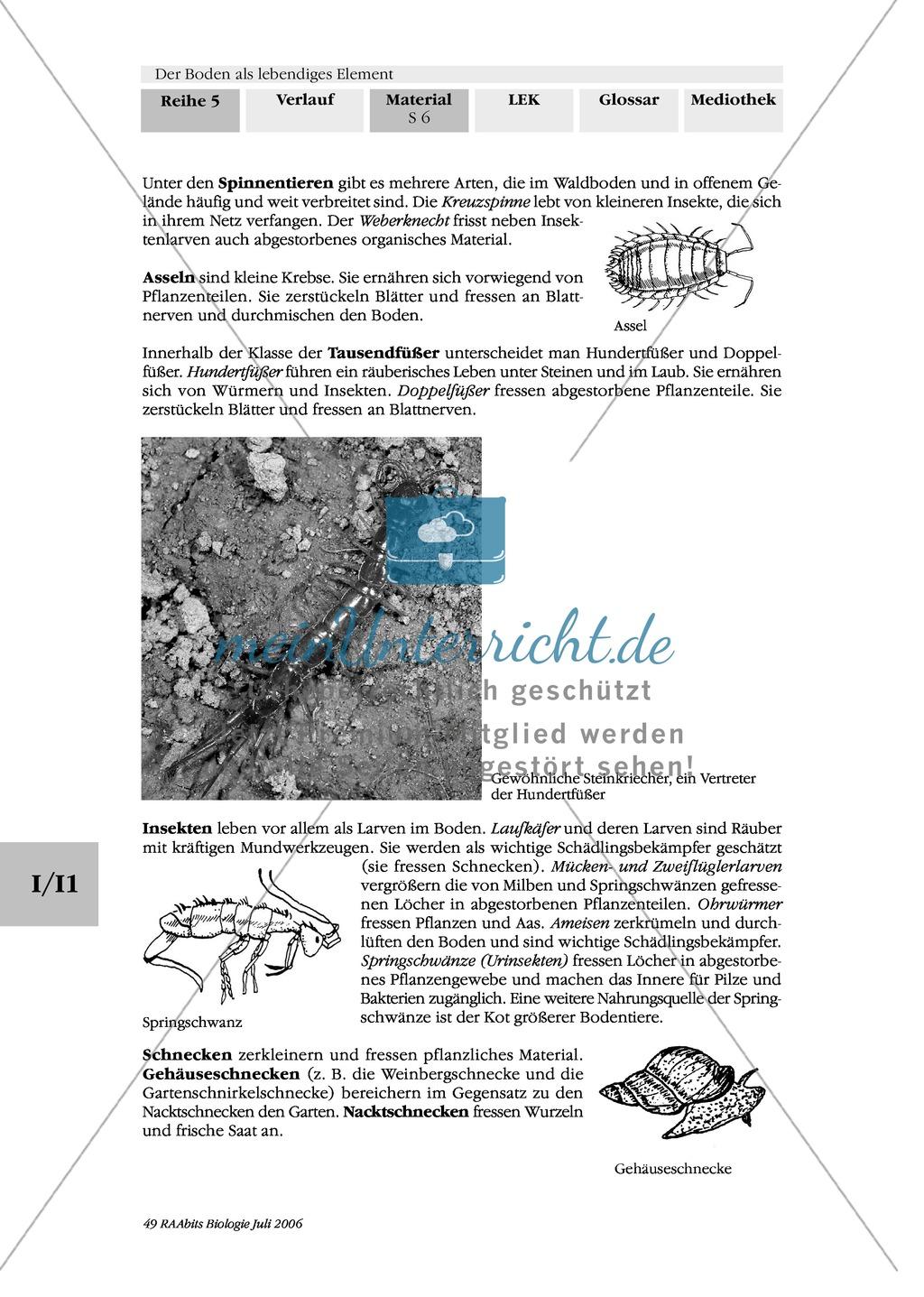 Lebewesen im Boden: Bestimmungshilfe Preview 3
