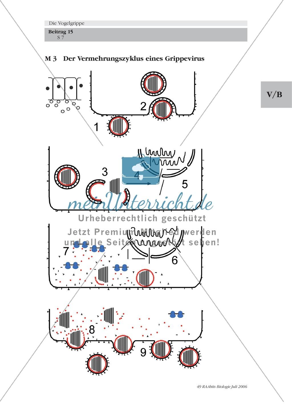 Aufbau und Eigenschaften des Vogelgrippe-Virus kennenlernen Preview 1