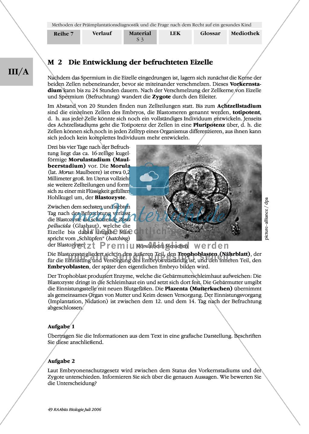 Text zur Entwicklung der befruchteten Eizelle und Gruppenpuzzle zur Präimplantationsdiagnostik und Pränataldiagnostik Preview 0