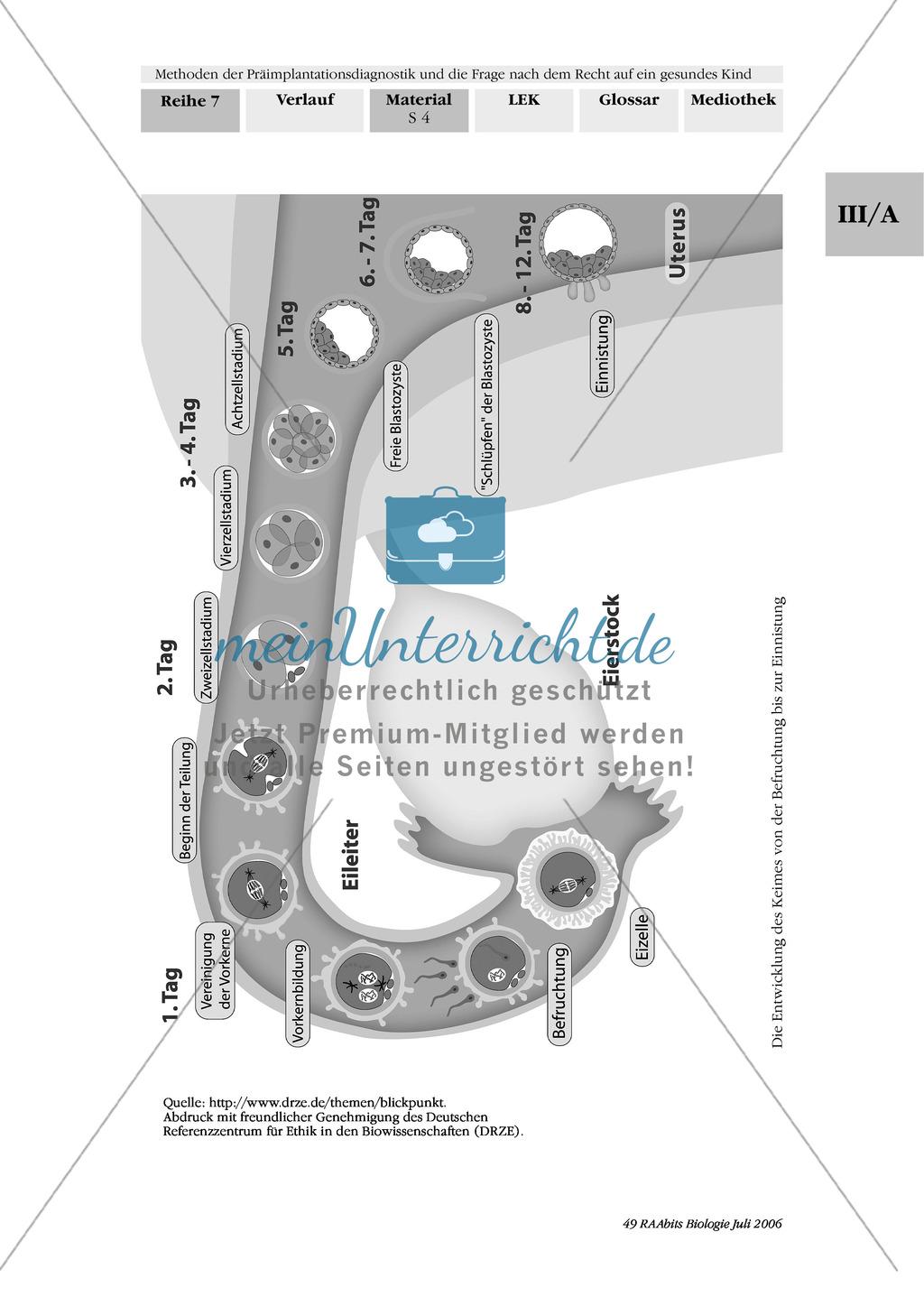 Text zur Entwicklung der befruchteten Eizelle und Gruppenpuzzle zur Präimplantationsdiagnostik und Pränataldiagnostik Preview 1