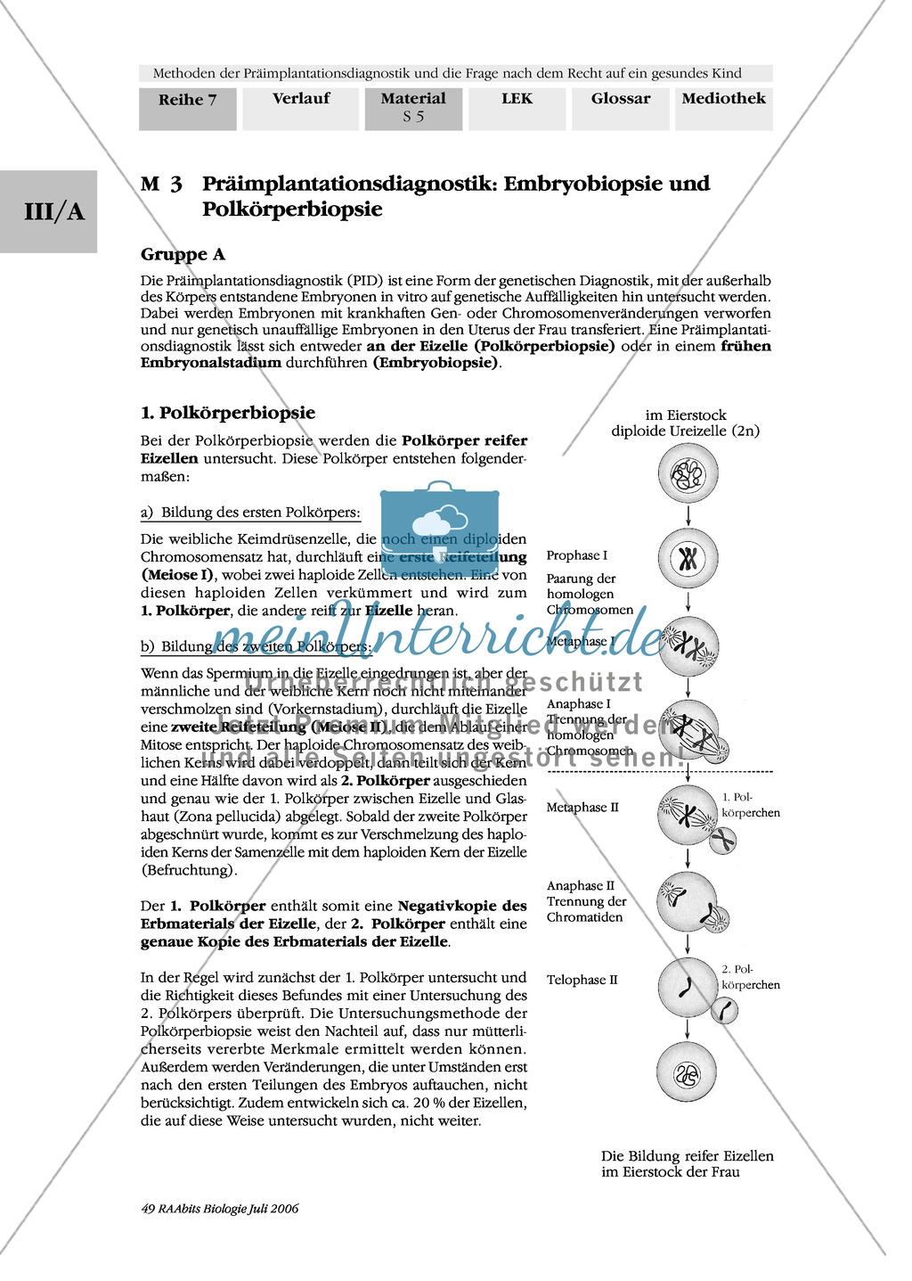 Text zur Entwicklung der befruchteten Eizelle und Gruppenpuzzle zur Präimplantationsdiagnostik und Pränataldiagnostik Preview 3
