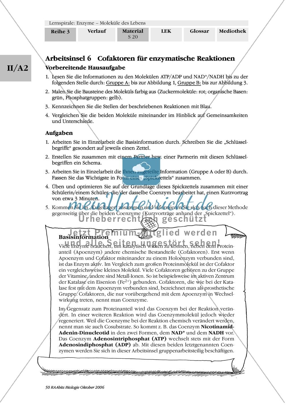 Enzyme: Arbeitsinseln zu den Themen Stoffwechsel, Enzymreaktionen, Hemmstoffe, Cofaktoren, Regulation Preview 13