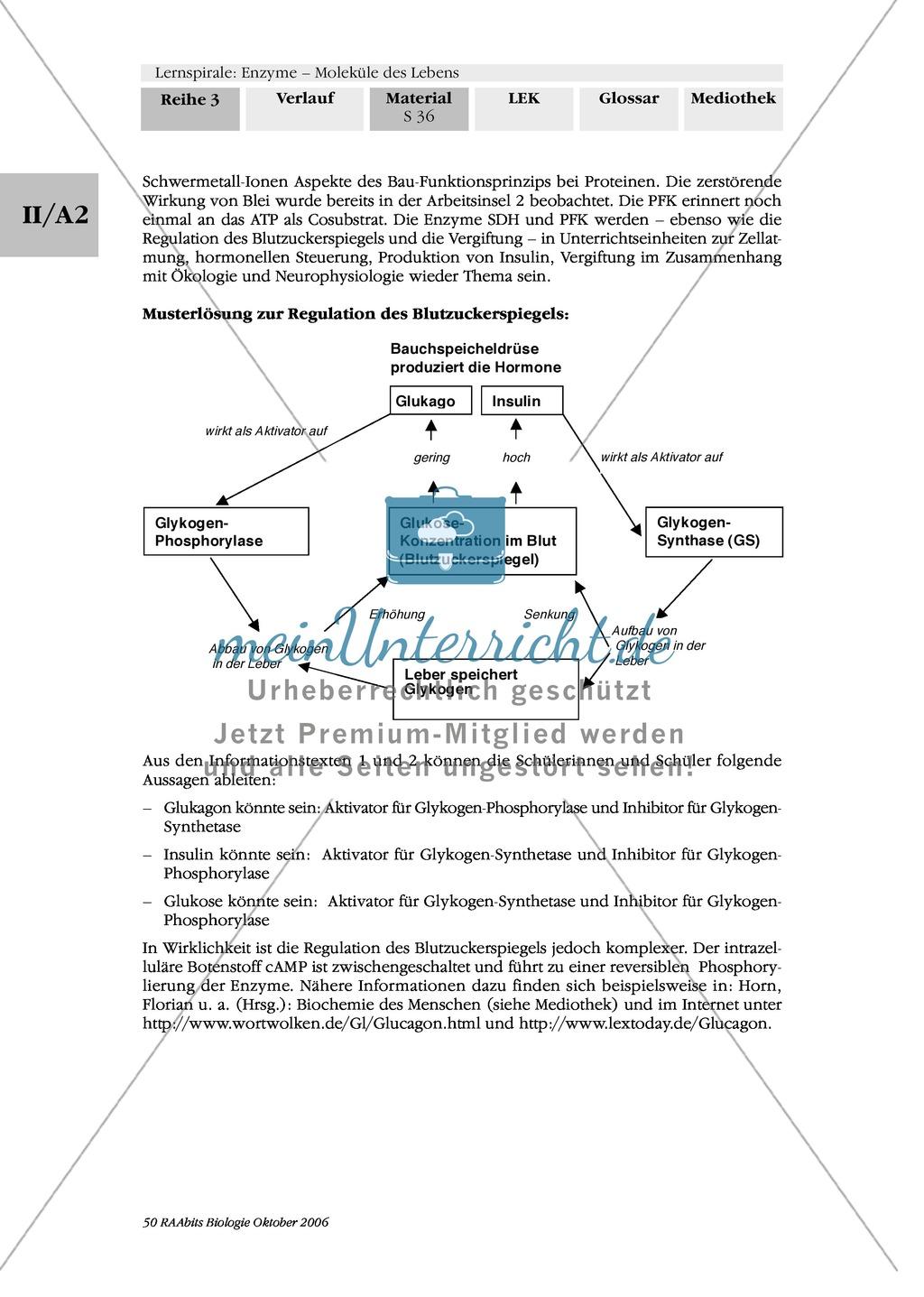 Enzyme: Arbeitsinseln zu den Themen Stoffwechsel, Enzymreaktionen, Hemmstoffe, Cofaktoren, Regulation Preview 28