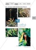 Carnivoren: Lernerfolgskontrolle - Ein Rätsel rund um fleischfressende Pflanzen Preview 3