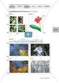 Biologie, Bau und Funktion von Biosystemen, Aufbau, frühblüher