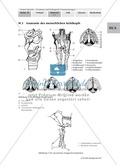Biologie, Entstehung und Entwicklung von Lebewesen, Evolution, Sprachevolution